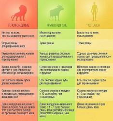 Устройство пищеварительной системы