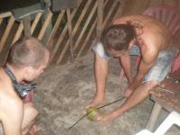 Голодные туристы пилят кокос